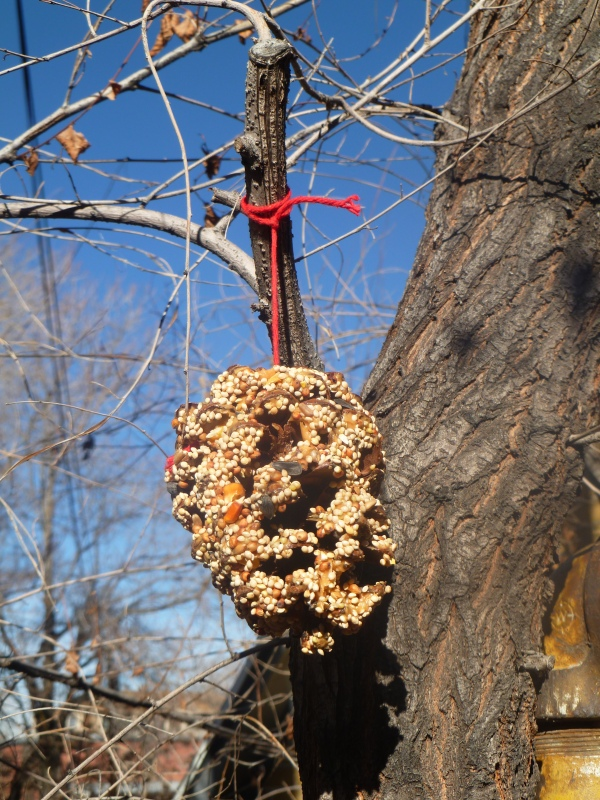 A second completed pine cone hanging form the tree.